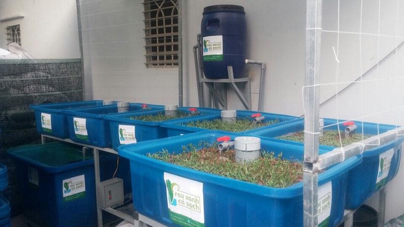 Chuyên Lắp Đặt Hệ Thống Tự Trồng Rau Sạch Aquaponics