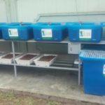 Kệ trồng rau xanh cá sạch theo mô hình Aquaponics