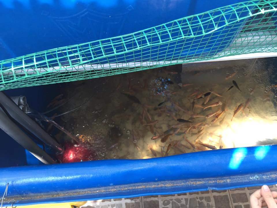 bồn cá của hệ aquaponics