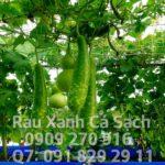 Cách chọn vị trí trồng rau Aquaponics trên ban công, sân thượng
