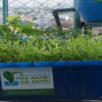 Phương pháp trồng rau trên sân thượng mau lớn và ít sâu bệnh