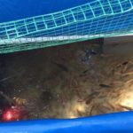 Dịch vụ bảo trì và cung cấp vật tư cho hệ Aquaponics