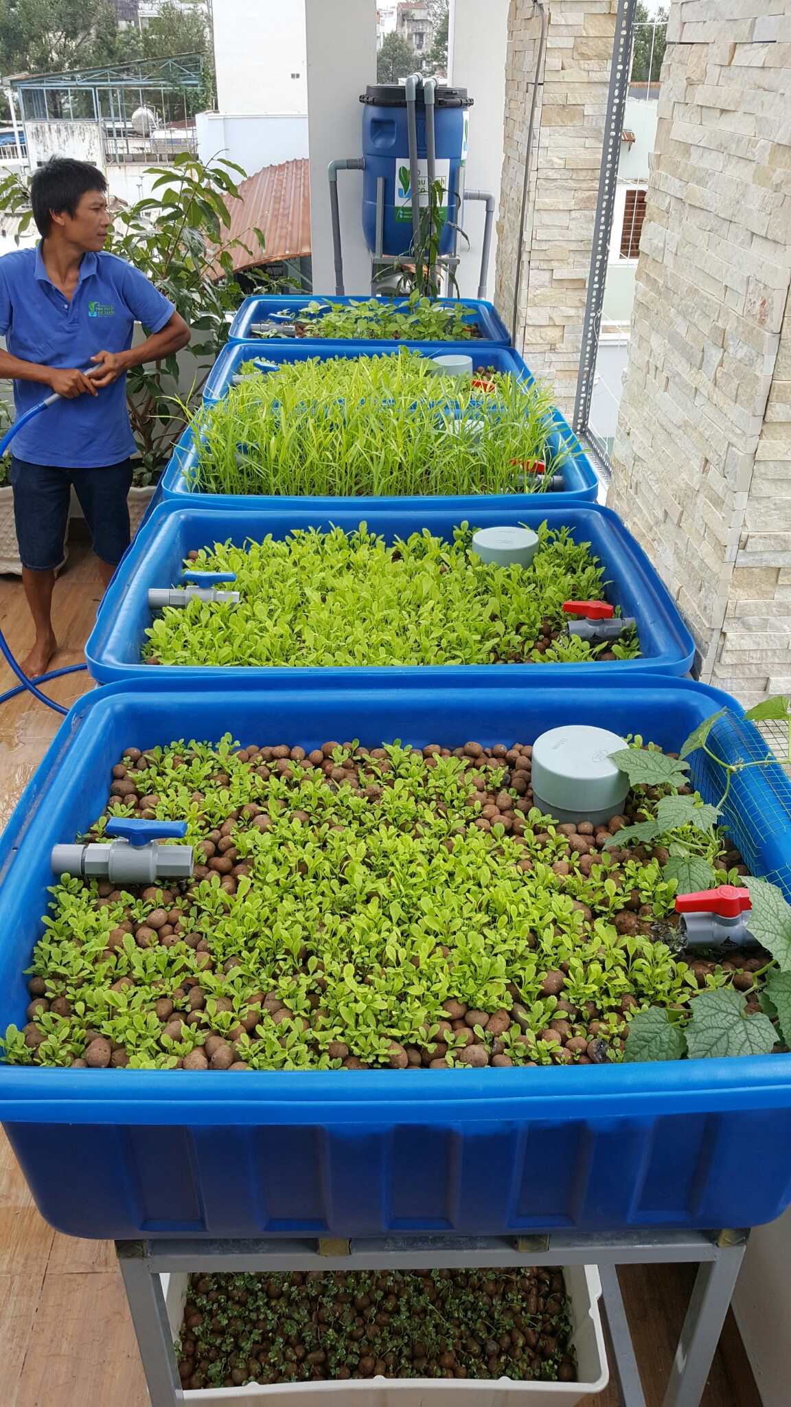 Aquaponics 5 thùng trồng rau