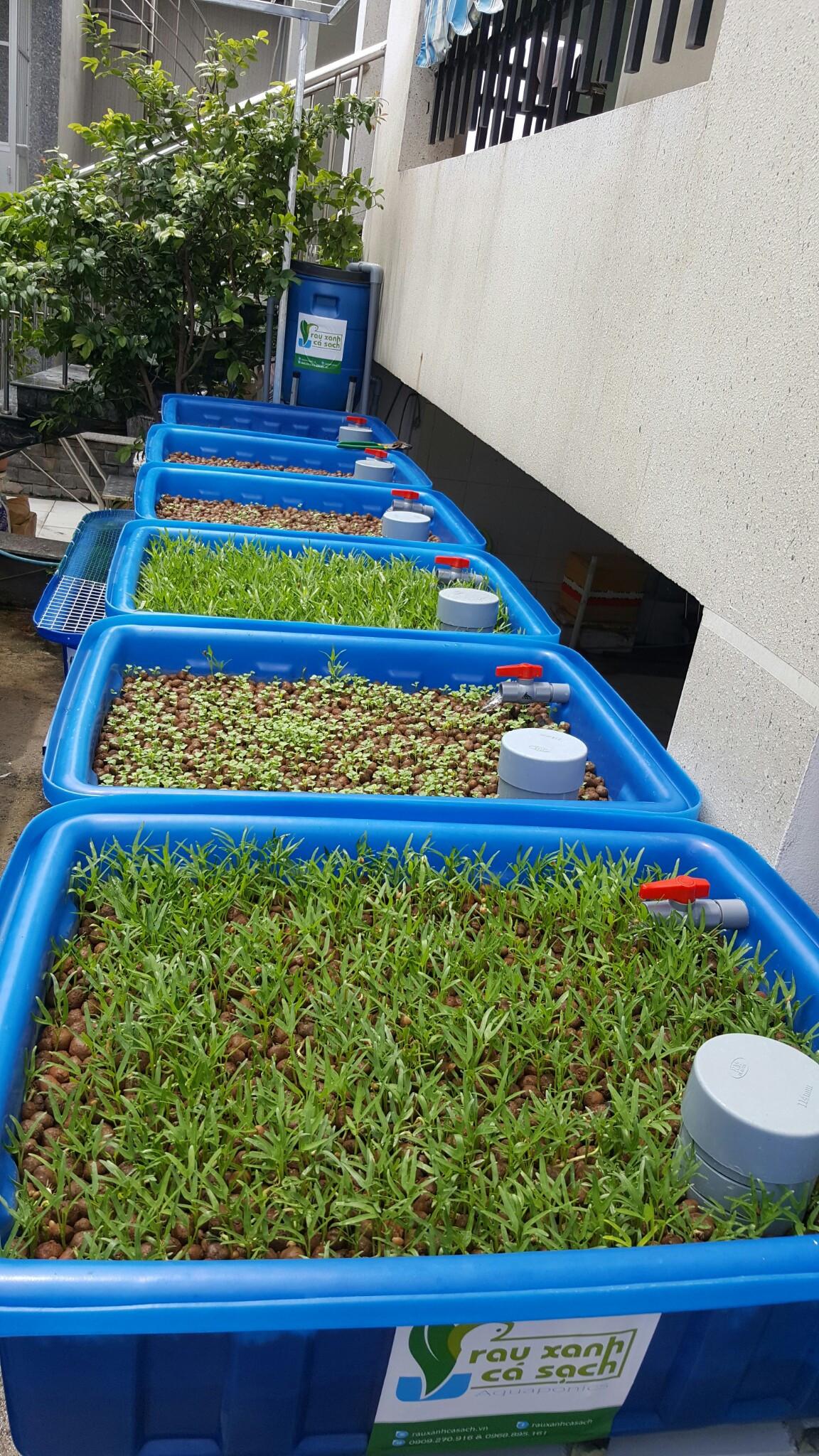 Hệ Aquaponics 6 khay trồng rau