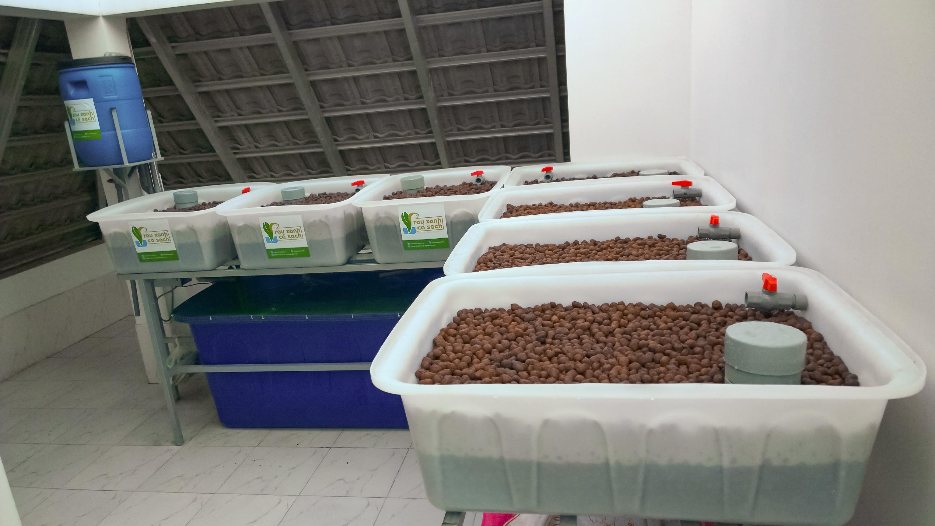 hệ aquaponics 7 khay trồng rau xếp hình L