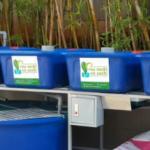 Hệ Rau Xanh Cá Sạch Aquaponics Mini 4 Khay Rau