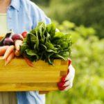 Trồng rau sạch Aquaponics – Chất lượng xứng đáng với chi phí đầu tư