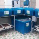 Tự trồng rau sạch Aquponics