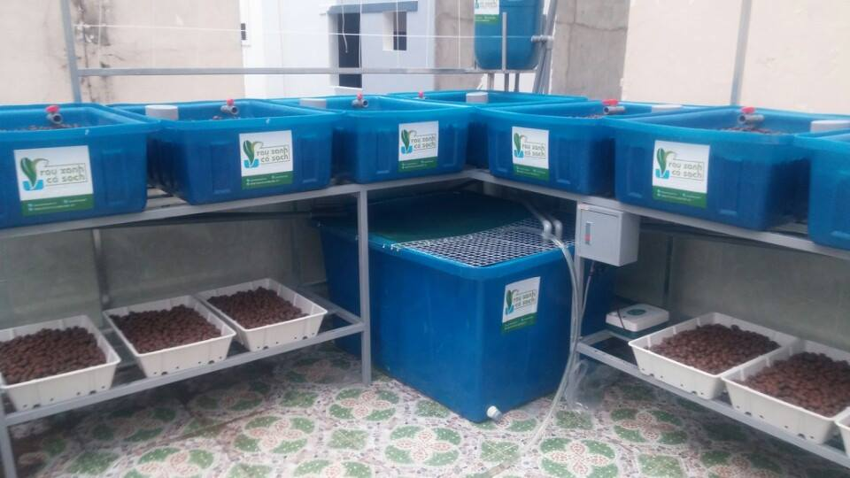 mo-hinh-aquaponics