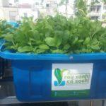 Cùng bạn trồng rau sạch tại nhà