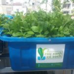 Kỹ thuật trồng rau sạch
