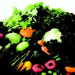 Tác dụng của rau xanh