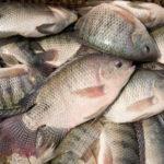 5 thực phẩm nhập khẩu từ Trung Quốc nên tránh xa