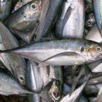 Cảnh báo ăn cá ngâm hóa chất có thể bị tử vong