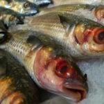 Hệ miễn dịch của con người có thể bị ảnh hưởng khi ăn cá nhiễm độc