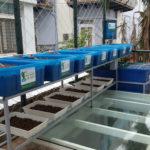 Kỹ Thuật Trồng Rau Sạch Tại Nhà Bằng Mô Hình Aquaponics