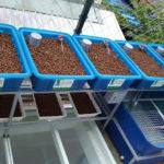 Hướng dẫn kệ trồng rau sạch dành cho gia đình nhỏ