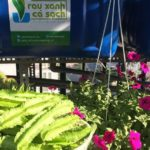 Đậu rồng, đậu bắp, gừng trồng trên giàn Aquaponics