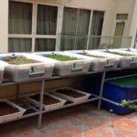 Giàn đôi 8 khay rau của anh Đặng Tất ở Quận 1 TP Hồ Chí Minh