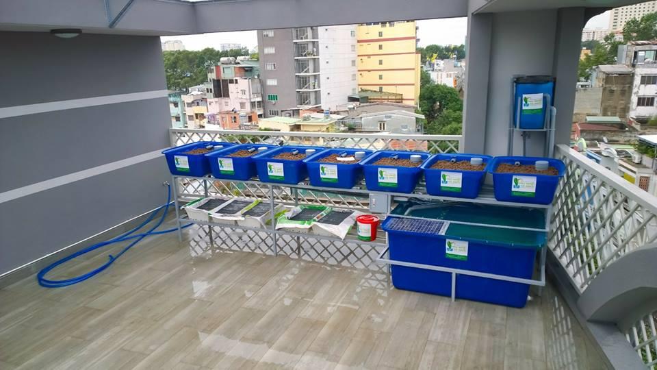 gian-rxcs-aquaponics-7-khay-rau-nha-chi-phuong-2