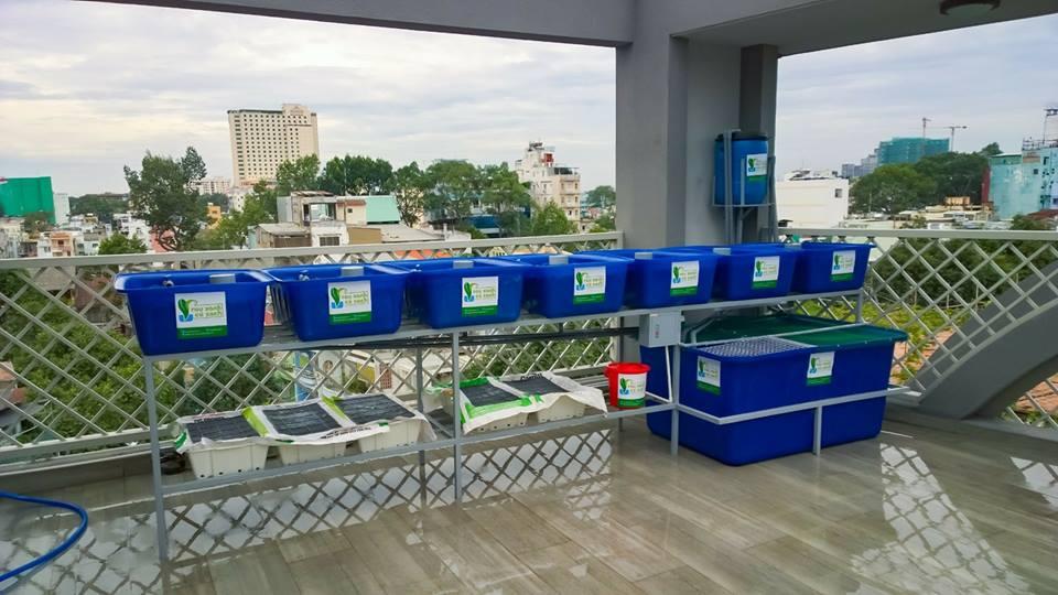 gian-rxcs-aquaponics-7-khay-rau-nha-chi-phuong-4