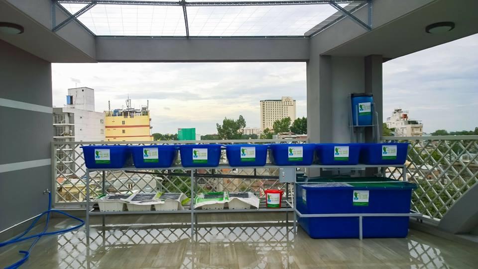 gian-rxcs-aquaponics-7-khay-rau-nha-chi-phuong-5