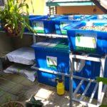 Giàn Rau Sạch Aquaponics Của Chú Cảnh Nhà ở Bình Thạnh