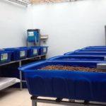 Giàn rau sạch 12 khay rau của chị Phương quận Tân Bình