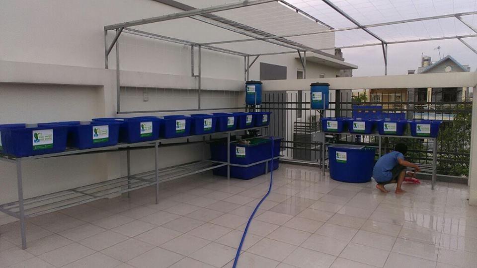 gian-aquaponics-8-khay-rau-xanh-va-gian-aquaponics-mini-4-khay-rau_0