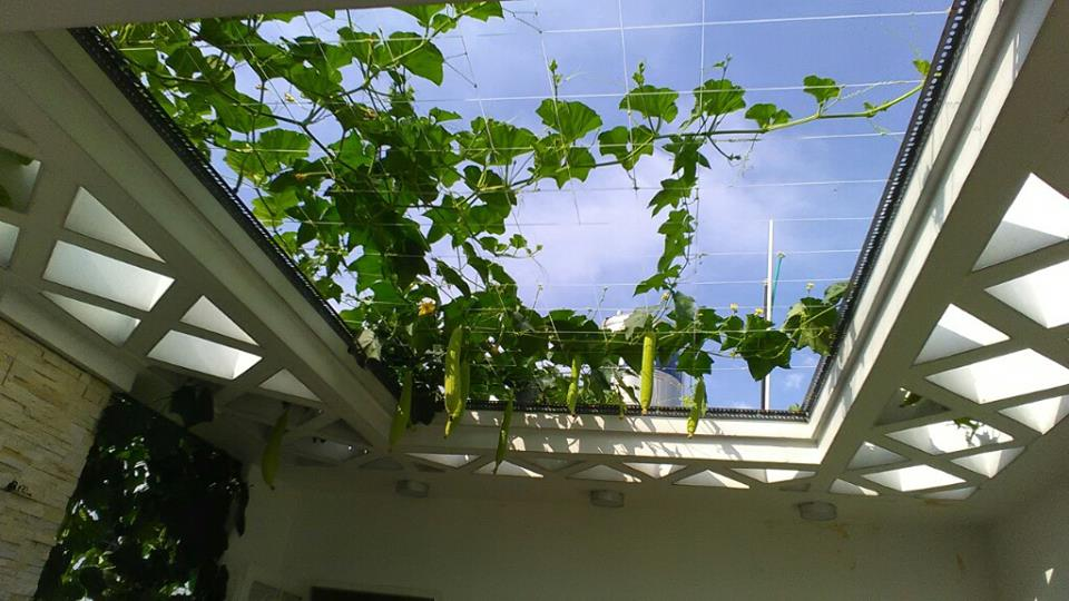 gian-muop-aquaponics-can-canh