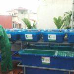 Bí Thư huyện Thanh Trì Hà Nội vừa mới lắp giàn rau sạch Aquaponics