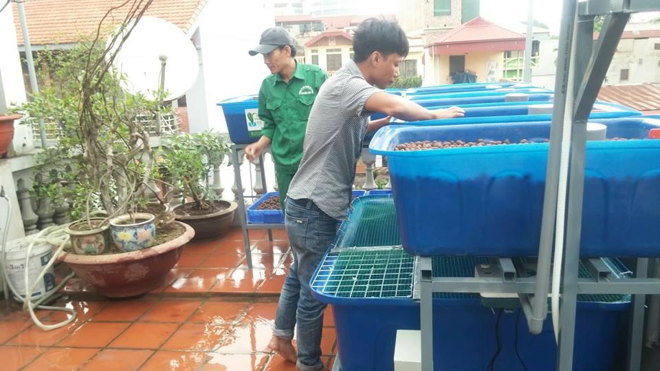 aquaponics-bi-thu-thanh-tri-ha-noi-3