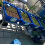 Hệ RXCS Aquaponics đường Trần Nhật Duật, Q1