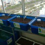 Dịch vụ lắp đặt trồng rau sạch tại nhà