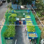 Aquaponics – Cung cấp thực phẩm sạch và bảo vệ môi trường