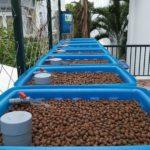 Có gì mới trong hệ thống trồng rau nuôi cá Aquaponics