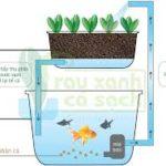 Vai trò của nước và vi sinh vật trong hệ Aquaponics