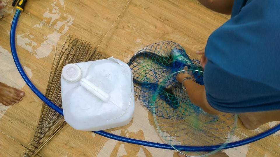 Cá sạch được nuôi trong hệ thống vườn rau sạch Aquaponics3