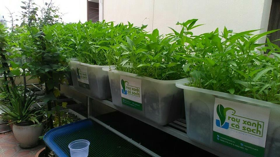 Các loại cây trồng thích ứng với hệ thống Aquaponics2