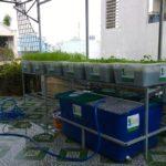Các yếu tố chính tạo nên hệ thống rau xanh cá sạch Aquaponics