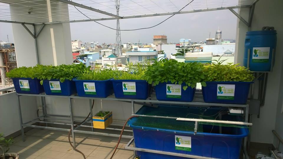 Cách trồng các loại rau sạch tươi xanh cho gia đình bạn5
