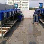 Dịch vụ trồng rau Aquaponics tại nhà trọn gói của RXCS