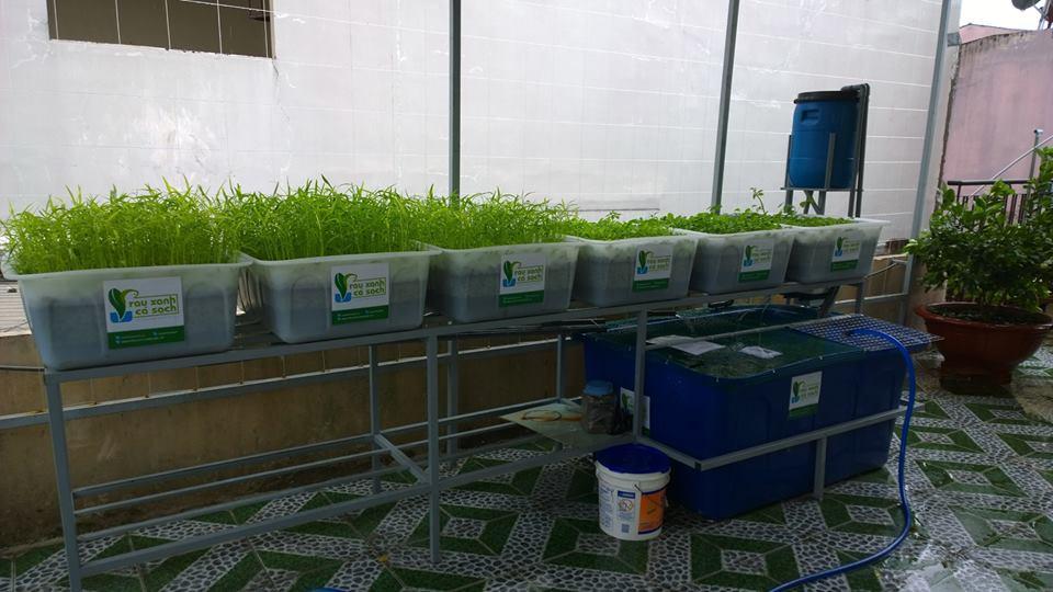 Dịch vụ trồng rau sạch hữu cơ, rau sạch Aquaponics tại nhà1