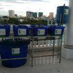 Giàn rau xanh cá sạch Aquaponics mini dành cho sân thượng