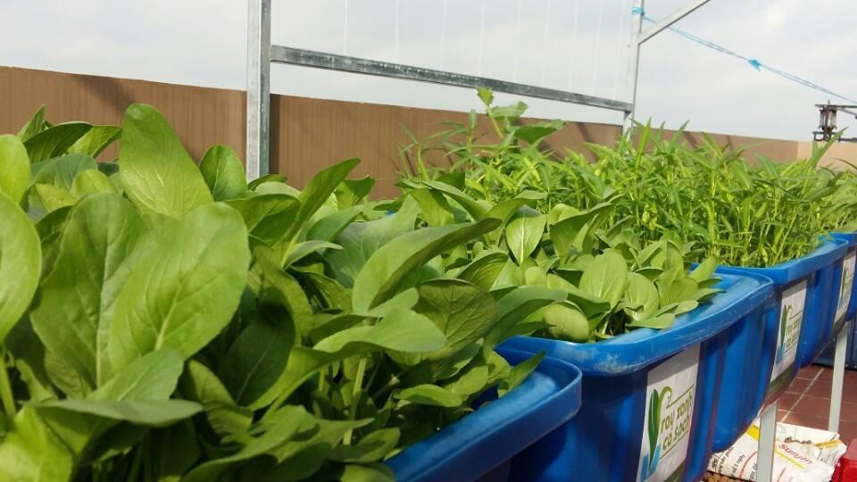 Mách bạn cách trồng và cách nhận biết rau hữu cơ