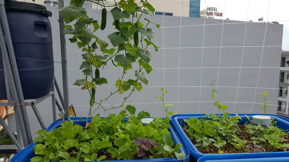 Phương án trồng rau sạch cho nhà phố quá dễ dàng1
