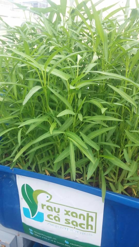 Tại sao nên lắp đặt giàn rau sạch hữu cơ và giàn rau sạch Aquaponics1