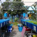 Thiết lập hệ thống trồng rau sạch hữu cơ Aquaponics
