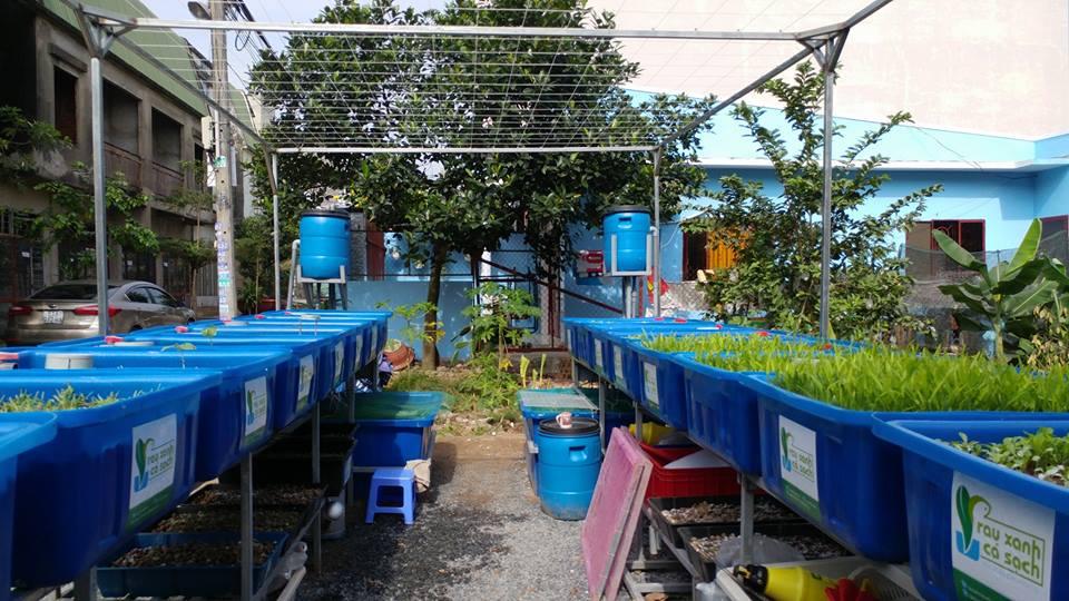 Thiết lập hệ thống trồng rau sạch hữu cơ Aquaponics2