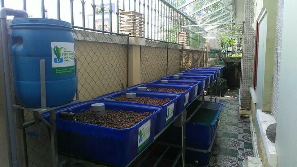 Trồng rau nuôi cá tại nhà - Không còn khó khăn